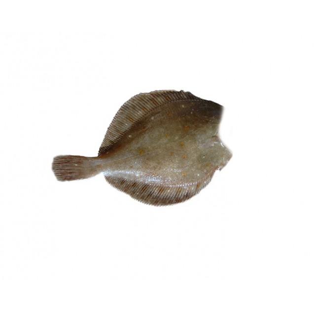 Камбала без головы,500-1000, потрошенная, Мурманск, 1кг