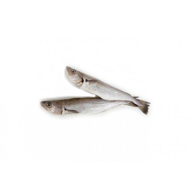 Путассу неразделанная (24+ см) изготовлена в море, Россия, 11кг
