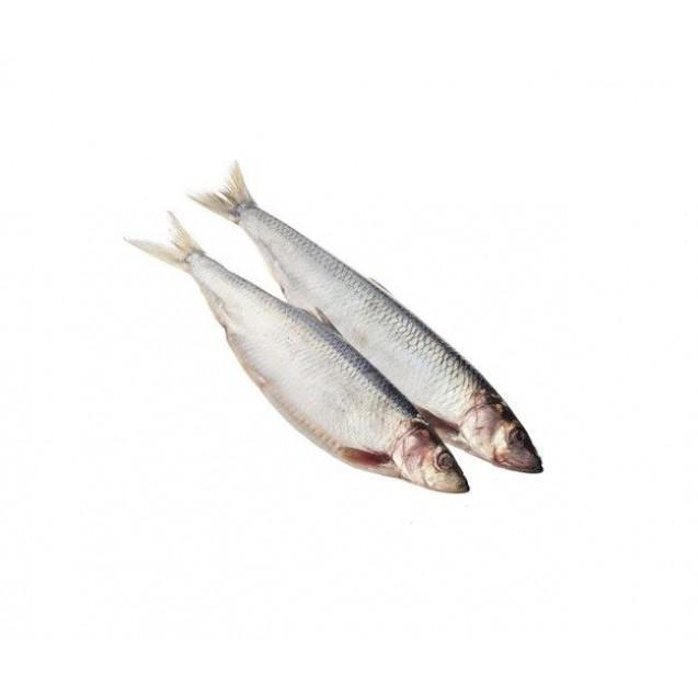 Сельдь тихоокеанская Олюторская (400-500 гр.) неразделанная, жирная, Дальний Восток, 6 кг